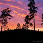 Fire sunset in Risveden
